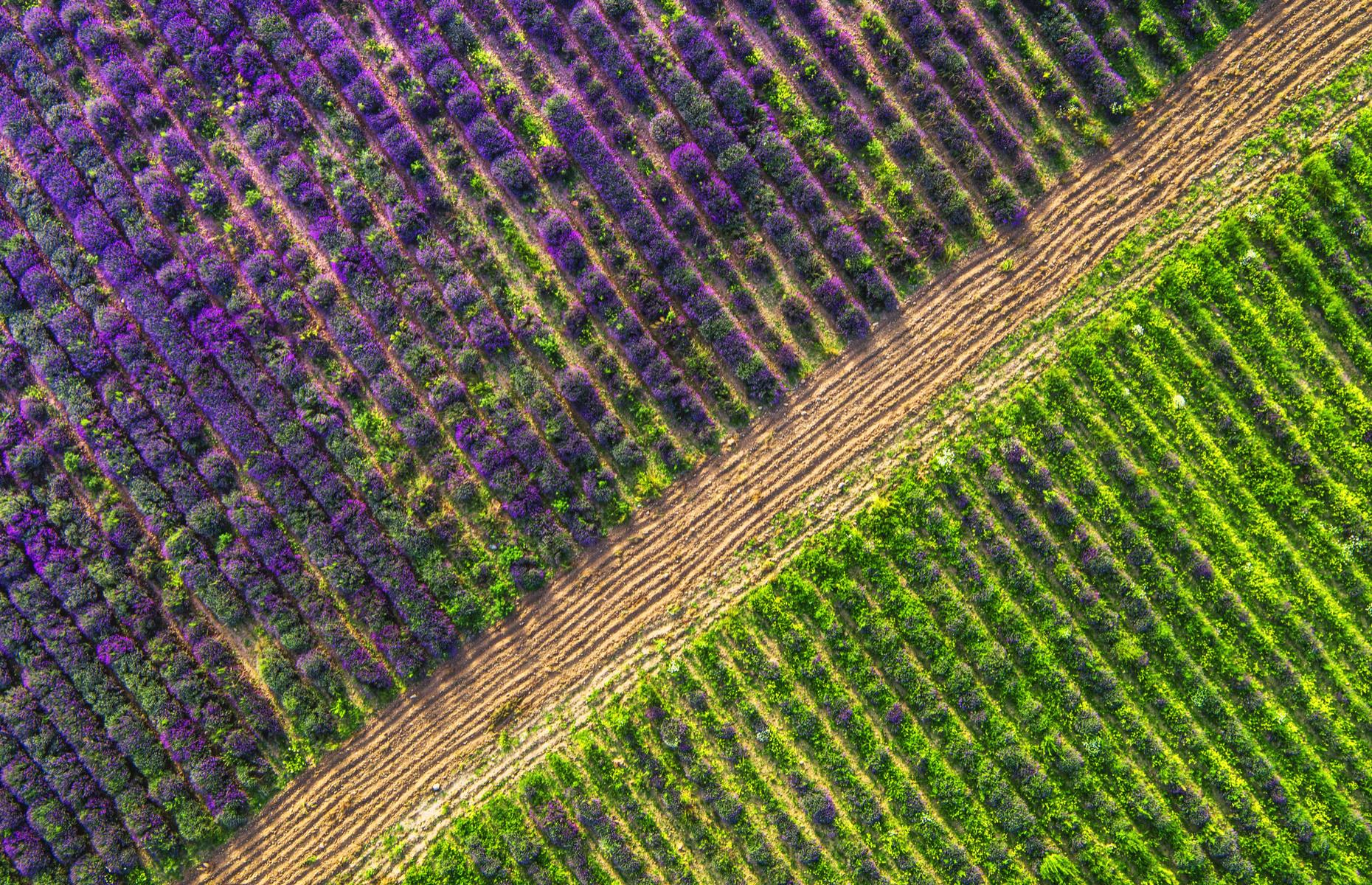Slide 23 of 43: The lavender fields of France's Provence region explode in a fragrant haze of purple from around mid-June up until August (though they're at their peak in early July). Looking down, though, you can admire the precise lines of purple sweeping in diagonal lines across the landscape.