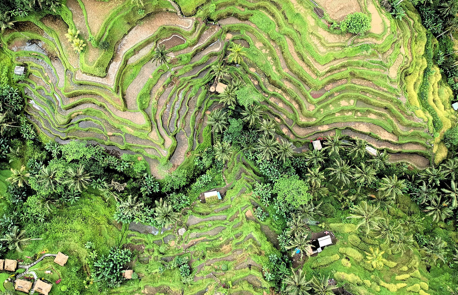 Slide 5 of 43: From the air, the lush, terraced rice fields of Tegallalang look almost otherworldly, scattered with palms, flowering shrubs and thatched huts. They stretch out about six miles (10km) north of the Balinese town of Ubud.