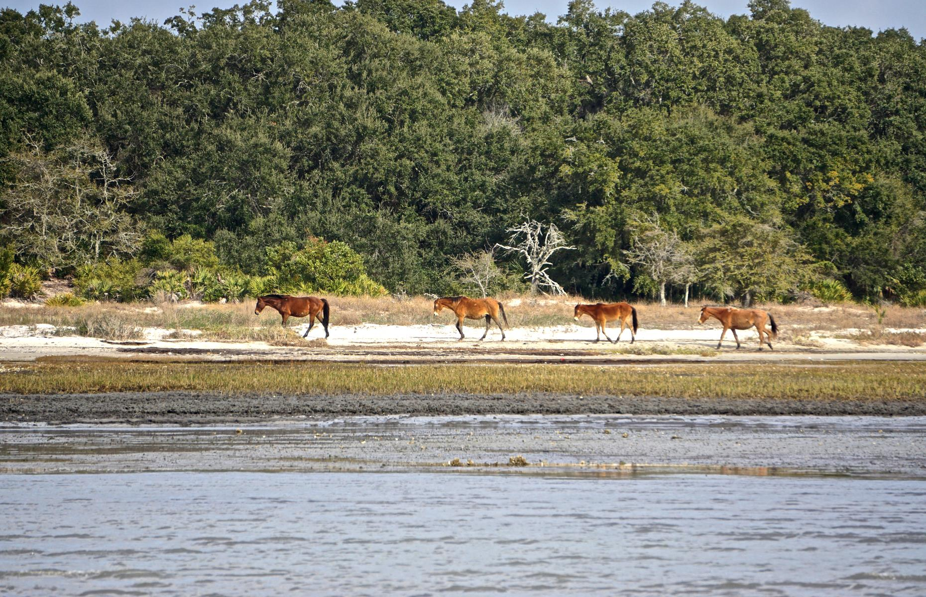 Slide 41 of 61: Wild horses roam Cumberland Island, the biggest of Georgia's barrier isles, at 18 miles (29km) long. It has windswept dunes and petrified trees, and a sprawling, unspoiled coast. Home to endangered loggerhead sea turtles – its tranquillity is such that you'll feel far further away than seven miles off Georgia's mainland. A ferry leaves the city of St Mary's from March through to November (booking is highly recommended) and the island offers hiking, biking and swimming opportunities, plus dark skies perfect for stargazing.
