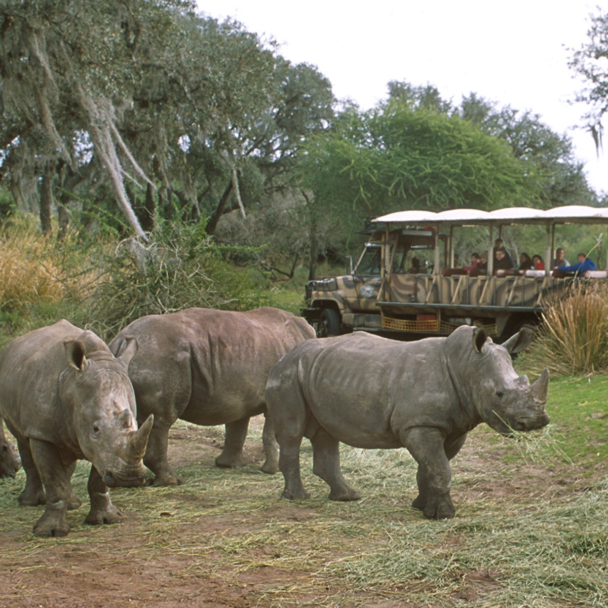 Slide 16 of 19: No, this isn't Africa. It's Disney World's Animal Kingdom park, which opened on April 22, 1998. Its goal is to help guests learn about and better appreciate all kinds of animals—like the rhinos seen here. Learn the real way Disney makes money—it's not their parks.
