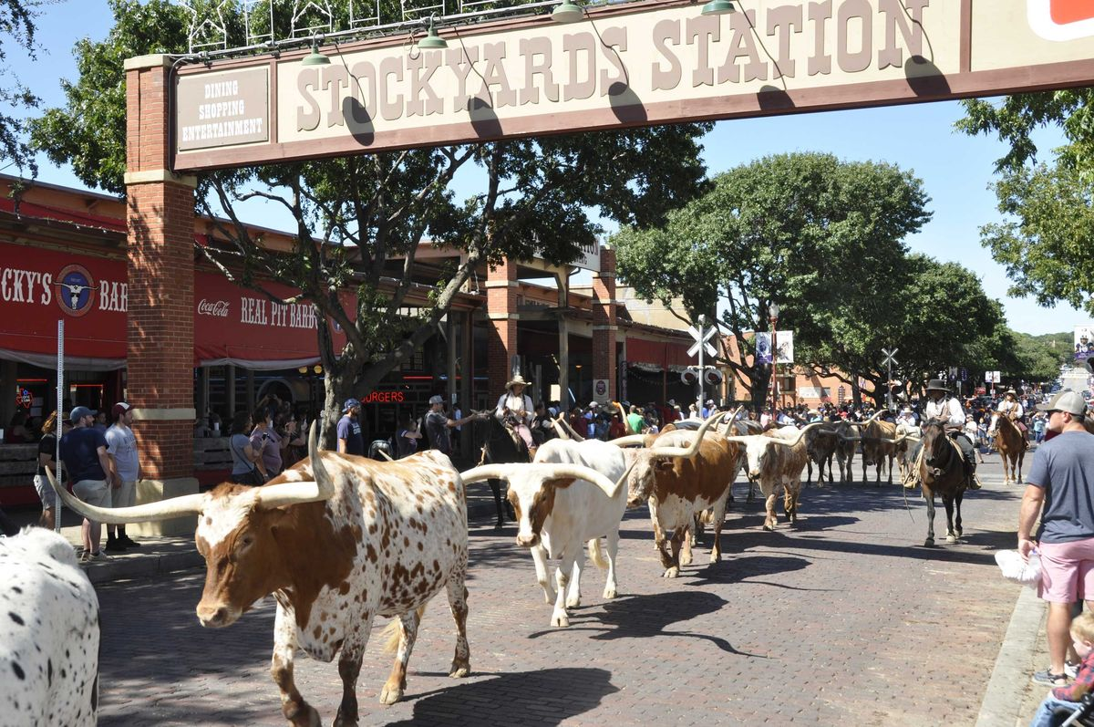 Slide 44 of 51: Fort Worth StockyardsYou know you entered the south when you can catch the world's only (twice daily) cattle drive where the Fort Worth Herd (real Texas cowhands) drives Texas longhorns down East Exchange Avenue. Be sure to stop into family-owned M.L. Leddy's, a Fort Worth staple since 1922, for custom hand-made cowboy boots, hats and belts.