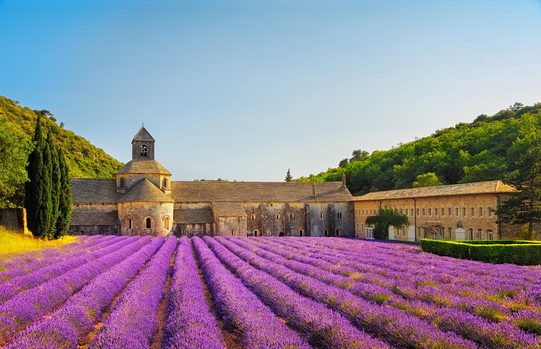 Slide 20 of 41: The lavender fields of France's Provence region explode in a fragrant haze of purple from around mid-June up until August (though they're at their peak in early July). The most concentration of lavender fields is on the high plateau around Sault, at the foot of the Mont Ventoux and around Apt and Gordes. Lavender is an important part of life in Provence as it has countless uses, from beauty products and soaps to aromatherapy, as a natural remedy and even in cooking.