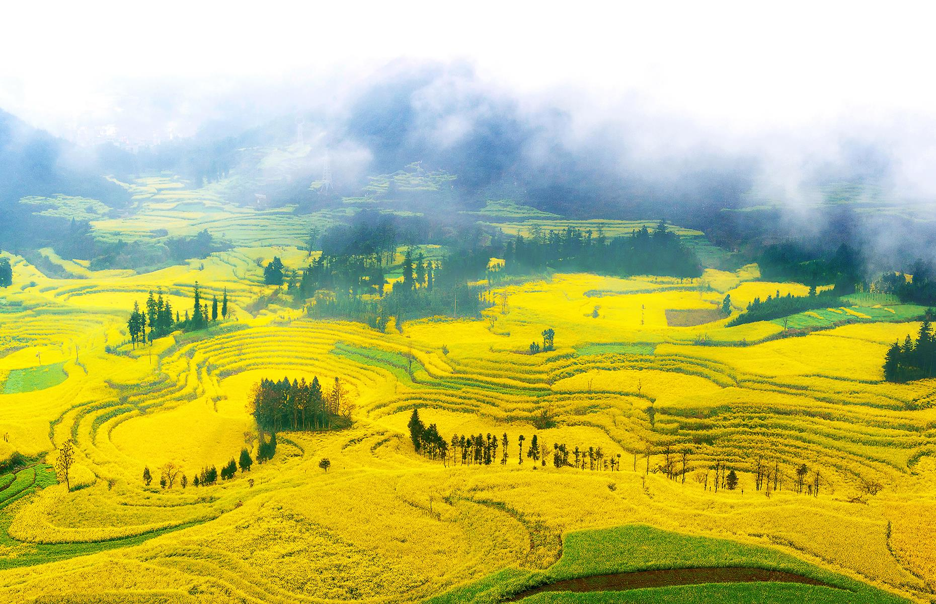 Slide 25 of 41: Another incredible event where man and nature come together, every spring 20 contiguous acres in Luoping in China are clad in an ocean of yellow. The county is home to one of the world's largest plantations of rapeseed flowers, also known as canola. As the golden buds bloom every February and March, the unique beauty is celebrated during Canola Flower Festival.