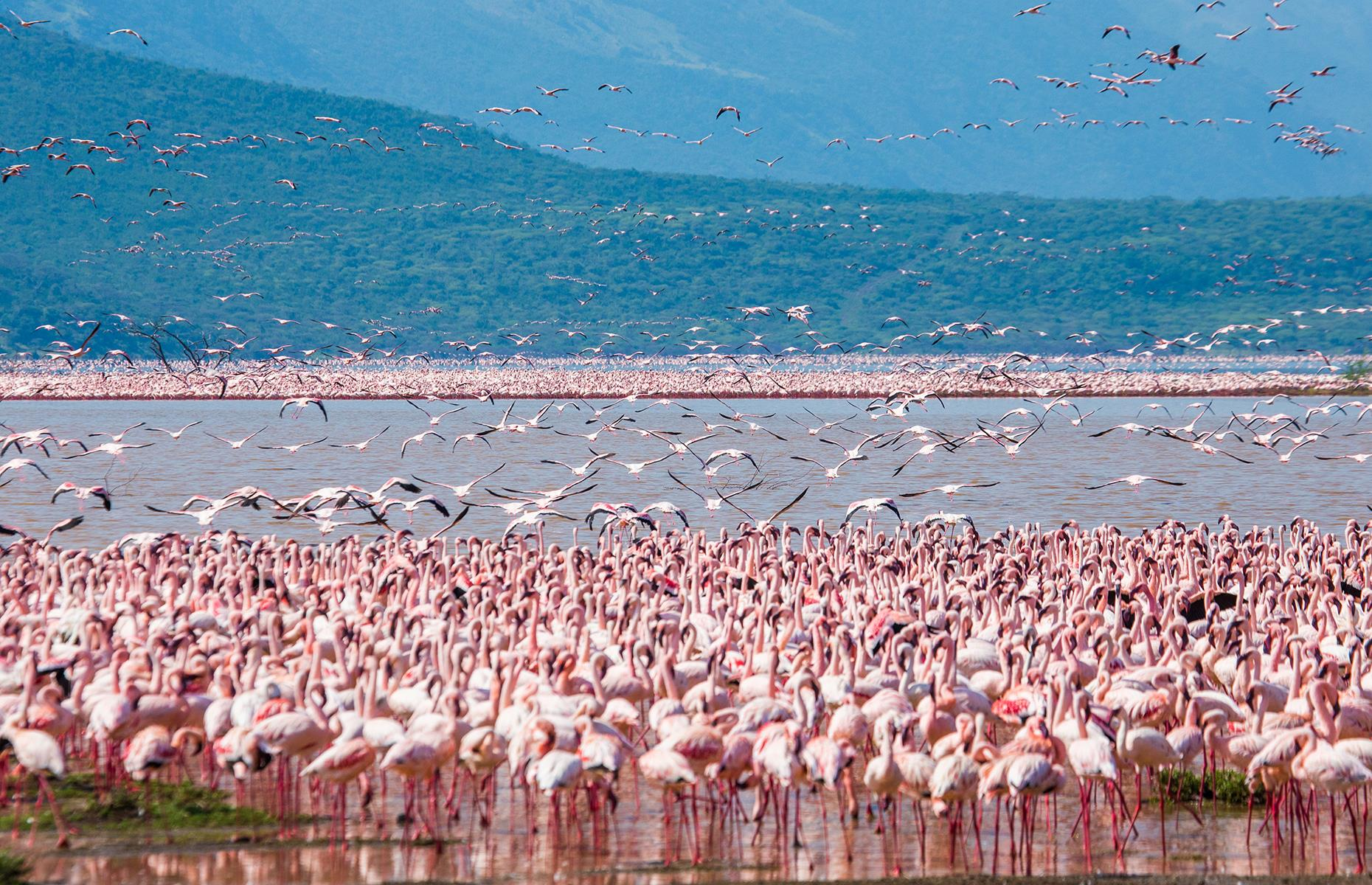 Slide 40 of 41: Each year during the peak of dry season in July and August hundreds of lesser flamingos, a species found in sub-Saharan Africa, flock to the algae-rich waters along eastern Africa's Rift Valley to feed. Preferred locations for this hardy bird, which have tough skin and scales to adapt to a wide range of environments, are the normally inhospitable, hypersaline waters of Lake Bogoria in Kenya and Lake Natron in Tanzania. Take a look at jaw-dropping places you can only see in photos.