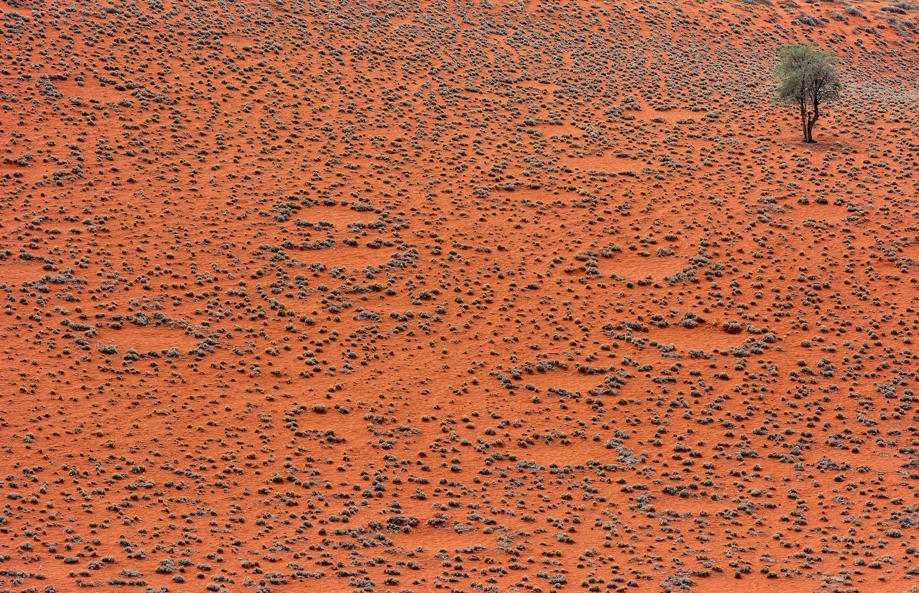 Slide 14 of 31: Are these circular patches, dotted over the Namibian desert in their millions, the work of gods, aliens or, erm, termites? Obviously one answer is less romantic than the others, but it's also the most logical theory scientists have come up with for the so-called fairy circles, which are only found here and in parts of Australia. There's still no official explanation and studies continue.
