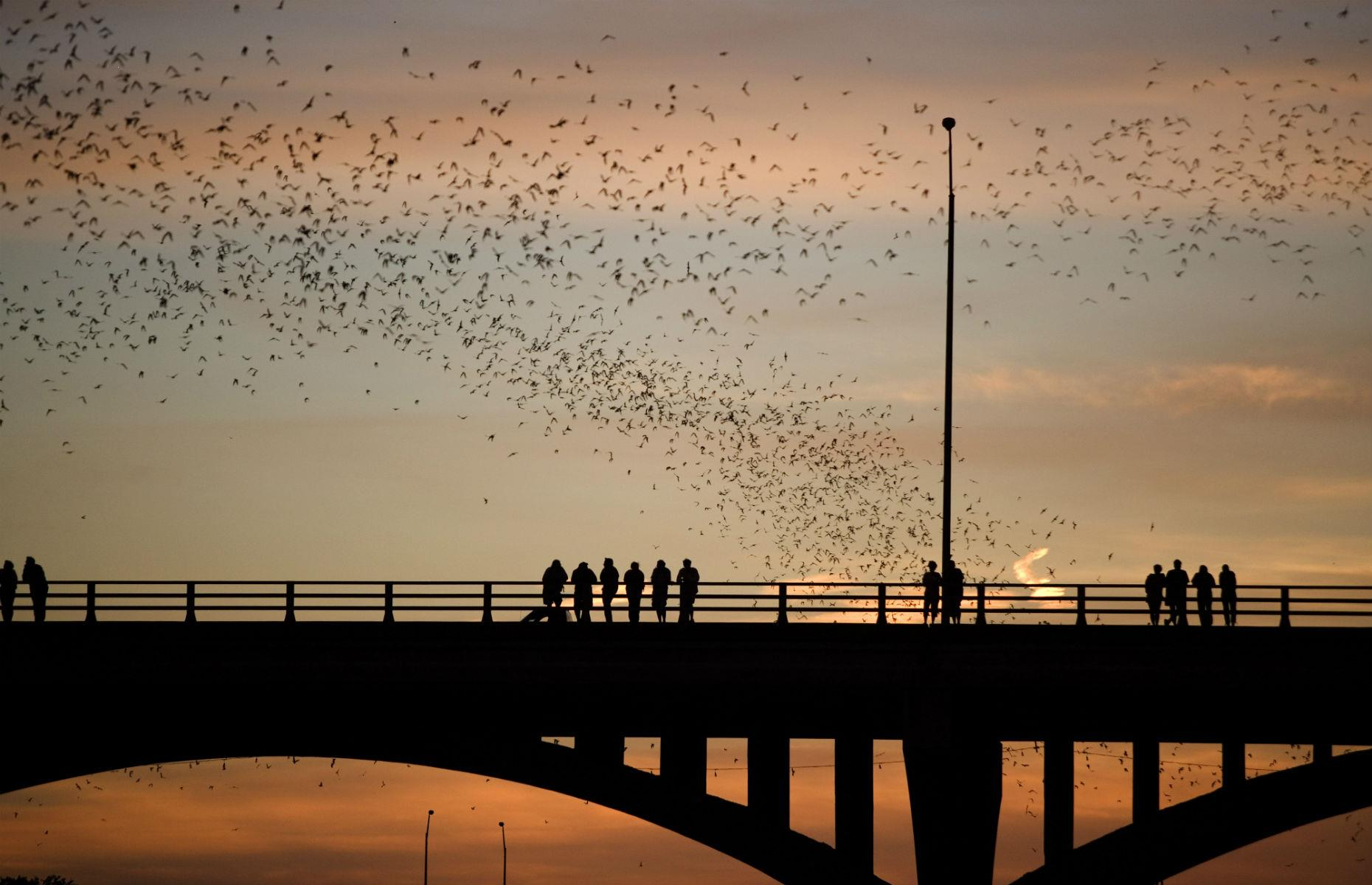 Slide 6 of 31: If you're in the city from late March to October then 20 minutes before sunset head to the Ann W. Richards Congress Avenue Bridge. It's estimated that 1.5 million Mexican free-tailed bats emerge at dusk, having spent the day hiding on the underside of the bridge. The colony usually fly towards Lady Bird Lake, so standing on the east-side walkway will offer the best views.