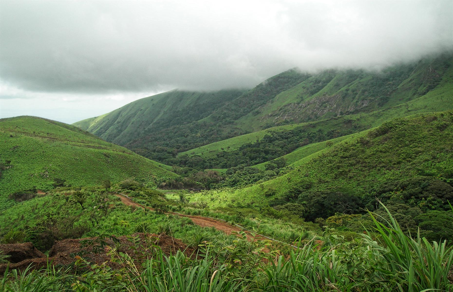 Slide 7 of 53: A UNESCO Biosphere Reserve for both Guinea and Côte d'Ivoire, Mount Nimba's slopes are draped in dense forest. These grassy mountain pastures harbor many extraordinary species, including the endemic viviparous toad and chimpanzees that use stones as tools. The reserve faces numerous pressures to its boundaries, caused by the neighboring populations and increased demographic pressure. Intense poaching and the traditional practice of clearing land for agriculture by fire have increased. Both Guinea and Côte d'Ivoire are working to protect the property by empowering local communities and promoting transboundary cooperation, UNESCO notes.