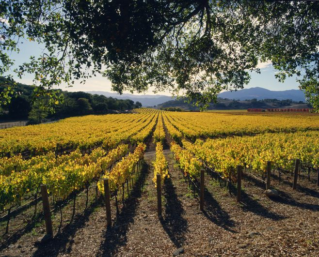 Slide 9 of 11: October is a prime time to visit the country's most famous wine region—it's harvest season, the temperature, in the mid-70s, is much more pleasant, and the leaves and vines have turned golden. The wineries (Silver Oak, Shafer, Opus One, and Chateau Montelena are a few of the highlights) are obviously a hit but interestingly, vineyards make up only about 9% of Napa Valley. Much of the rest is protected by the Land Trust, providing plenty of outdoor recreation such as hiking and mountain biking. The Francis House in Calistoga is one of the area's most unique stays. Originally a landmark 19th-century French Second Empire-style mansion listed on the National Register of Historic Places, it has been meticulously restored and transformed into a five-key luxury inn. Plus, it's just two blocks from Calistoga's charming downtown with its local shops, restaurants, and weekend farmer's market. At the Solage, an Auberge Resort, new private poolside cabanas (which can be converted into private dining spaces at night) have been added and the hotel is also arranging private poolside wine tastings so you can drink your way around Napa without ever getting up from your chaise longue.Shop Now The Francis HouseShop Now Solage, Auberge Resorts Collection More: T&C Travel Guide: Napa Valley and Sonoma County