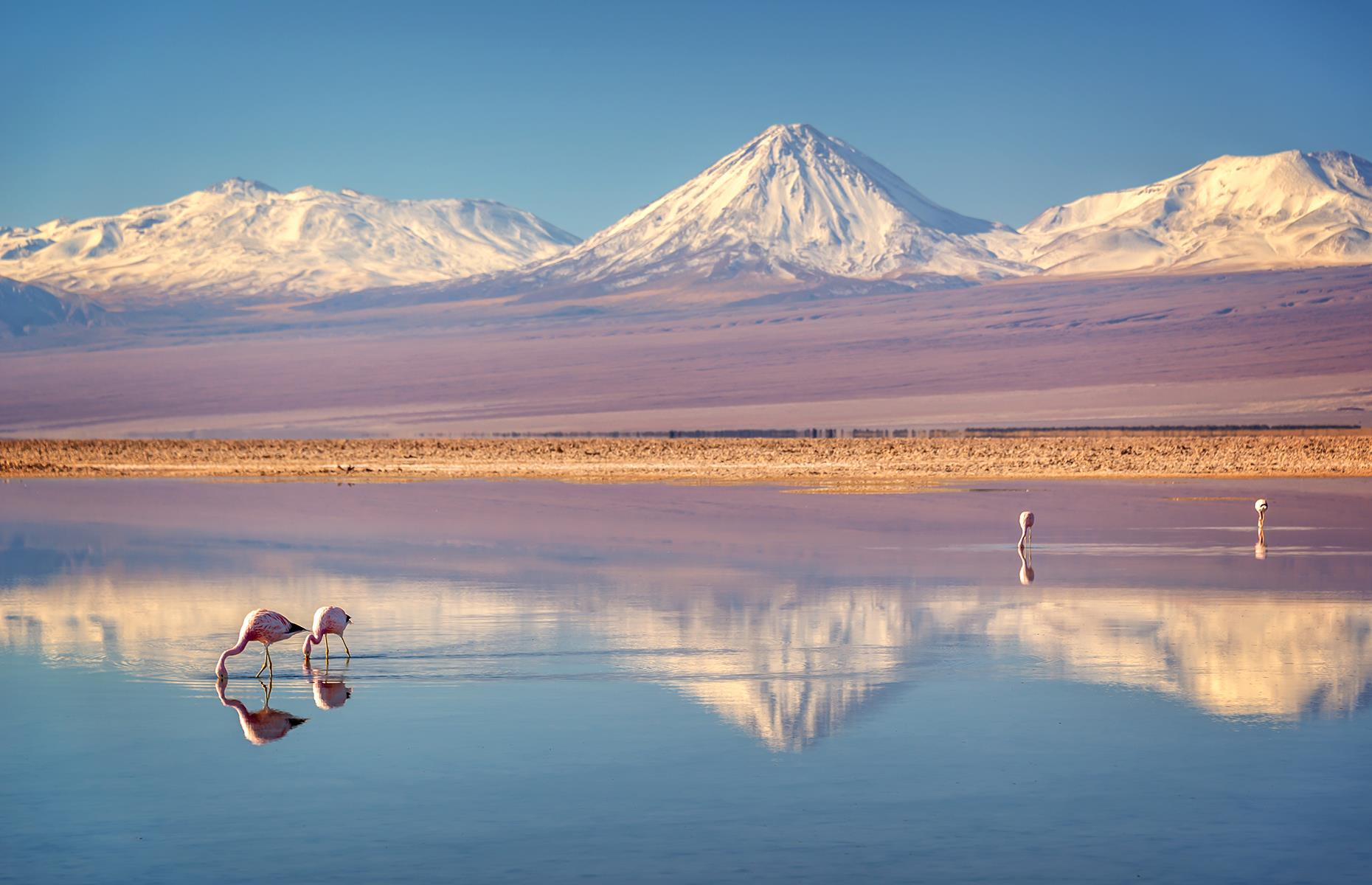Slide 31 of 31: Often mistakenly cited as the driest place on Earth, Chile's Atacama Desert isn't far off it. One of the world's strangest landscapes, its 40,000-square-mile (103,600sq km) expanse is defined by salt basins, red rocks, sand and soil so lifeless that NASA can carry out its Mars ground tests here. Although Atacama is very sparsely populated and living conditions aren't ideal, many species have made it home, including the Andean flamingos, living in the high-altitude salt flats.