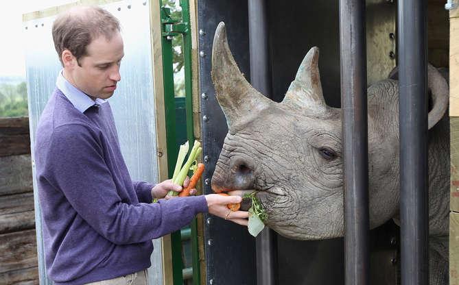 Slide 11 de 16: Ele é engajado em causas importantes e defende com unhas e dentes algumas espécies de animais que estão sofrendo perigo de extinção. Quando uma rinoceronte que ele havia conhecido havia dado à luz e, por isso, a espécie não estava mais tão ameaçada, ele comemorou bastante!