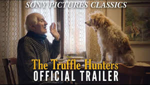 a person and a dog looking at the camera: THE TRUFFLE HUNTERS follows a handful of men, seventy to eighty years young, in Piedmont, Italy, on the search for the elusive Alba truffle. They're guided by a secret culture passed down through generations, as well as by the noses of their cherished and expertly trained dogs. The documentary subtly explores the devastating effects of climate change and deforestation on an age-old tradition through a visually stunning narrative that celebrates life and exalts the human spirit.  https://www.sonyclassics.com/film/thetrufflehunters  #Sony #SonyClassics #TheTruffleHunters #Trailer