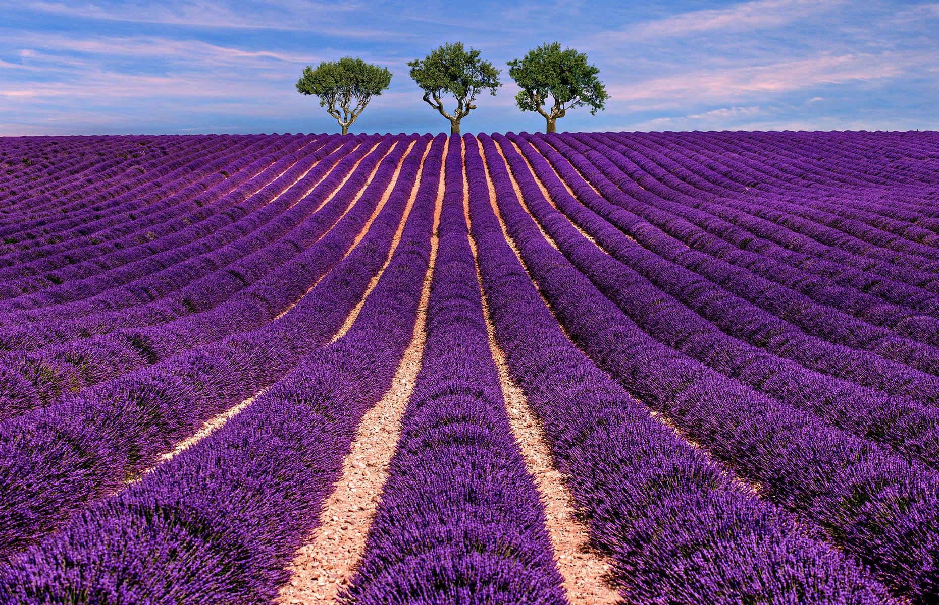 Slide 11 of 43: The lavender fields of France's Provence region explode in a fragrant haze of purple from around mid-June up until August (though they're at their peak in early July). The most concentration of lavender fields is on the high plateau around Sault, at the foot of the Mont Ventoux and around Apt and Gordes. Lavender is an important part of life in Provence as it has countless uses, from beauty products and soaps to aromatherapy, as a natural remedy and even in cooking. These are the most wonderful views on Earth.