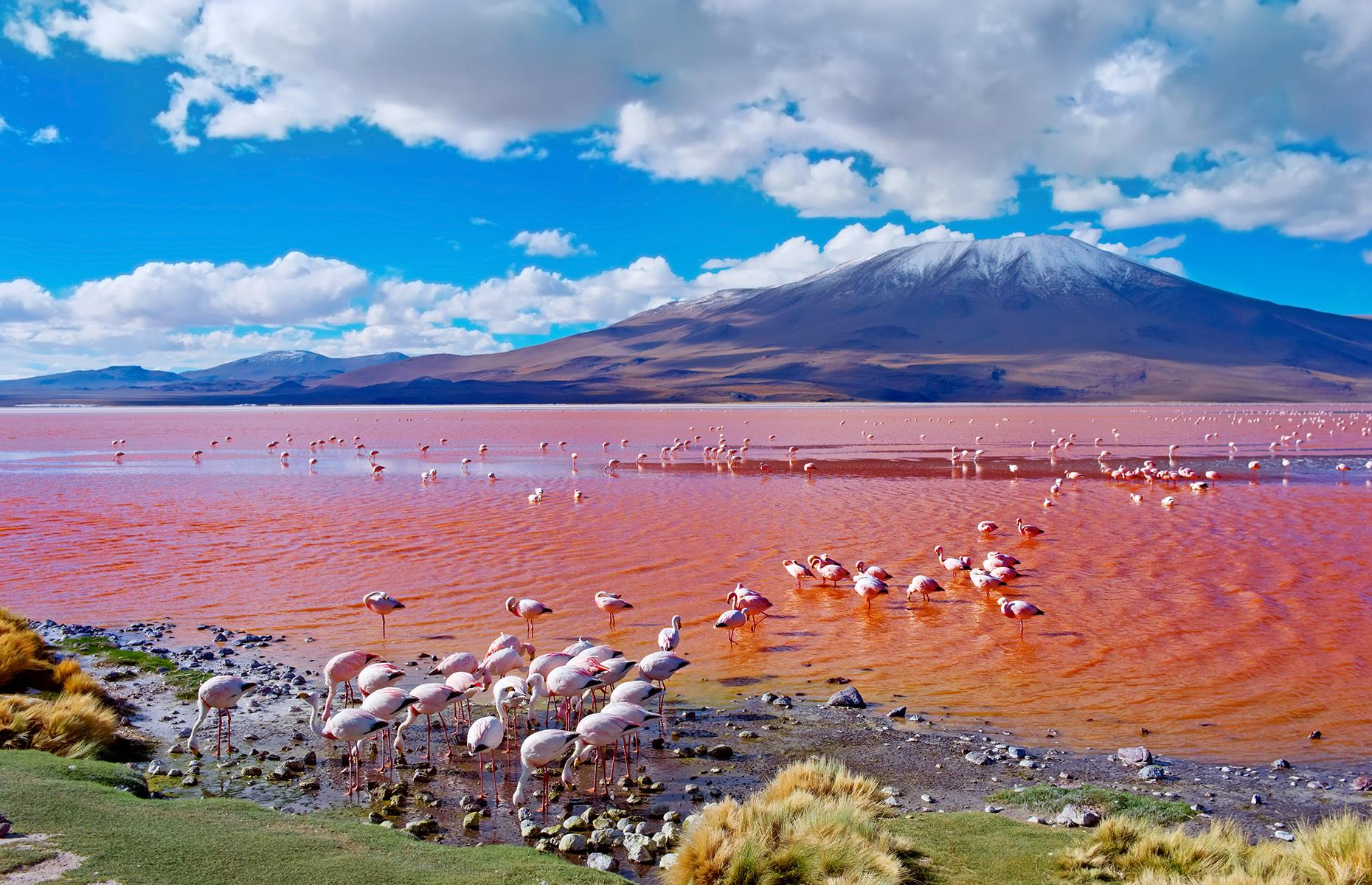 Slide 15 of 43: Located high up in a natural reserve close to the Chilean border, this shallow, red salt lake is considered to be one of Bolivia's most beautiful natural landmarks thanks to its striking appearance and large flocks of flamingos that hang out here. The water gets its unique color due to red sediments in the water and pigmentation of some algae.