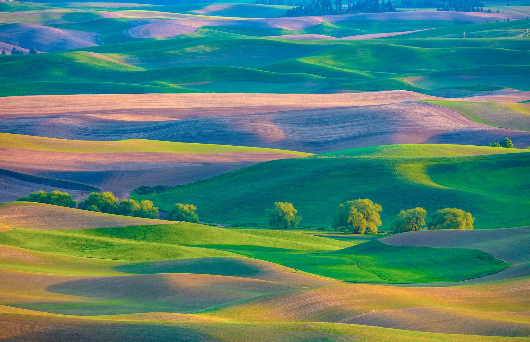 Slide 8 of 43: Despite being one of America's most attractive regions, the Palouse often slips under the radar. This major agricultural area, which also encompasses parts of Idaho, is known for picture-perfect pastoral fields that shimmer in shades of purple and green. These idyllic hills were formed over tens of thousands of years, from wind-blown dust and silt from dryer climes.