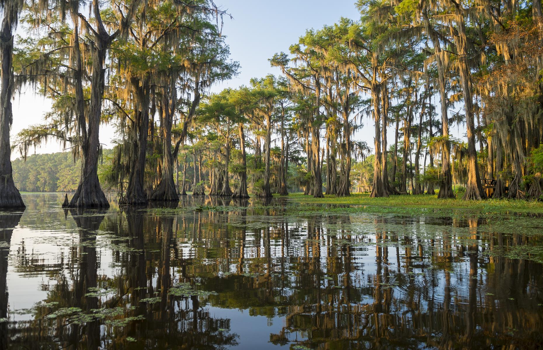 Slide 26 of 31: This swampy lake straddles Texas and Louisiana, and it could hardly be more Southern in its feel and appearance. Spanish moss drips from cypress trees, whose broad, knotted trunks are submerged in the soupy water. Now take a look at these photos of the world's most beautiful trees.