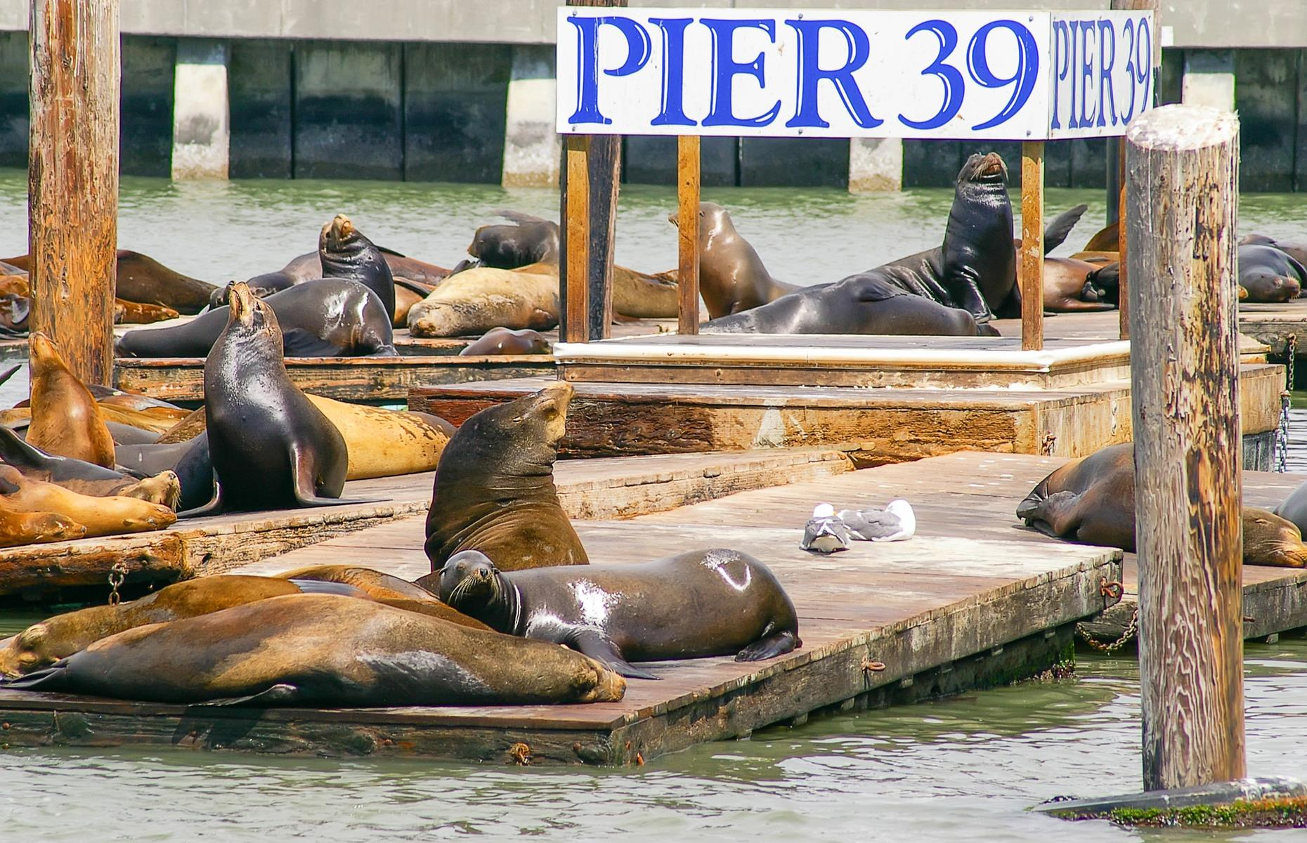 Slide 42 of 49: Pier 39 is a favorite tourist stop in the City by the Bay – visitors generally come in their hordes to take in the basking sea lions, colorful amusements and wacky street performers. Modified operating hours and one-way systems aim to keep Pier 39's visitors safe, but those hoping for a quieter experience might make a beeline for Pier 7 instead.