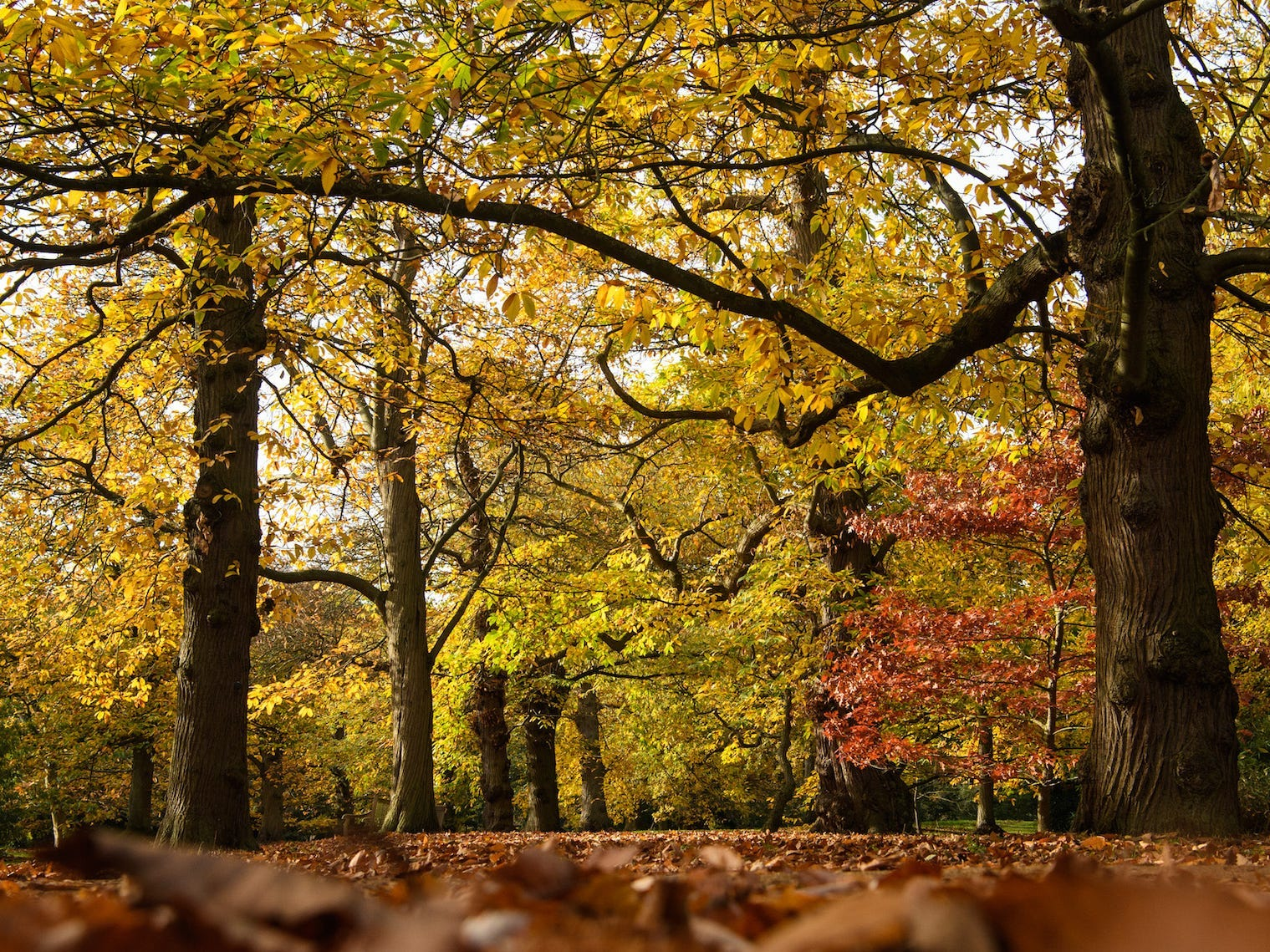 Slide 1 of 17:  Fall is a great time to travel if you're after gorgeous views of changing leaves or fun destinations with smaller crowds.  There are plenty of great autumn destinations across the US, including Tarrytown, NY, Salt Lake City, UT, and Door County, WI. If you're interested in attending fall-themed festivals and events, head to the Kentucky Triangle, Orlando, Florida, or Salem, Massachusetts.  Visit Insider's homepage for more stories. Fall is one of the most beautiful times of the year. Temperatures are cooling down, the foliage is gorgeous, and the summer crowds have usually dispersed. That's exactly why the autumn months are the perfect time to do a little bit of traveling to a spot that allows you to take full advantage of the natural beauty. Read on for a few places across the US that are perfect for a fall getaway.Read the original article on Insider