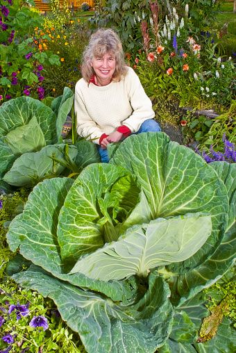 Slide 3 of 51: Due to its long summer days, produce in Alaska can often reach jaw-dropping sizes — like a 138-pound cabbage that was grown in the great state (this photo isn't the cabbage in question, but you get the idea).