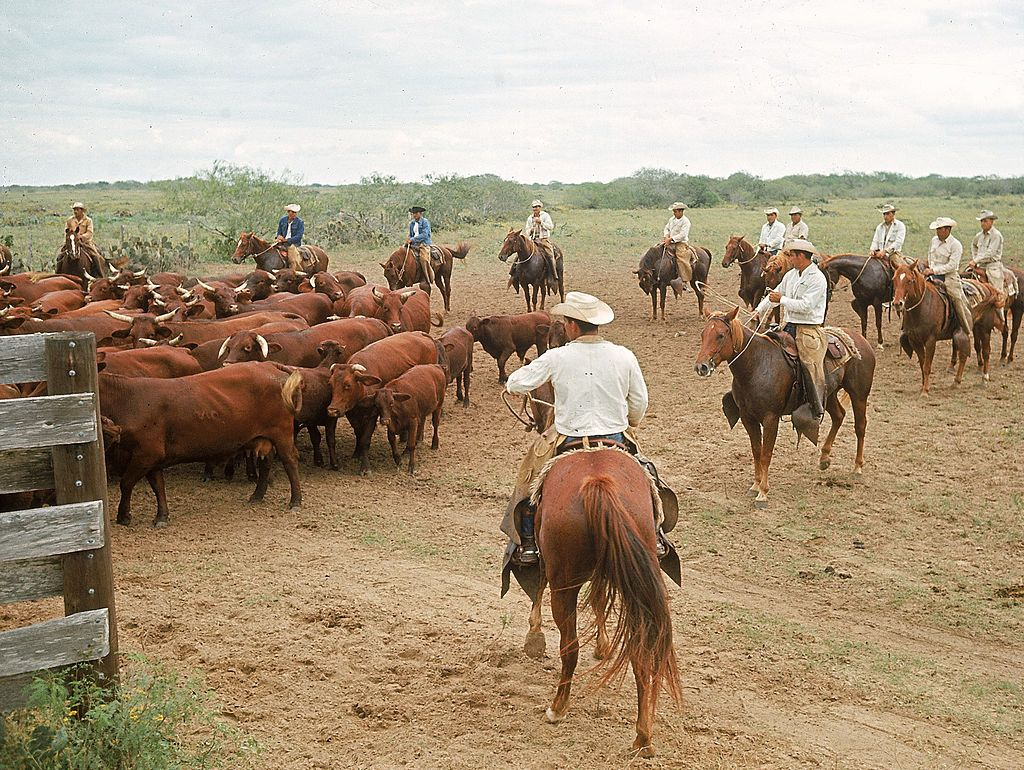 Slide 44 of 51: King Ranch Texas is one very, very big ranch. It's set on 825,000 acres of land, making it even larger than the state of Rhode Island! Here's a peek at what life was like on the ranch in 1965.