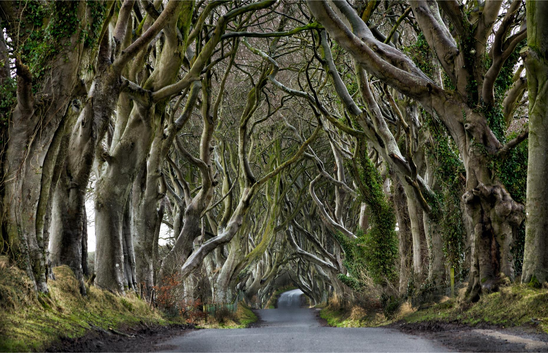 Slide 4 of 31: This haunting tunnel of beech trees in Country Antrim known as the Dark Hedges shot to worldwide fame when it was used as the location for the Kingsroad in HBO's Game of Thrones. The deciduous trees were originally planted in the 18th century by the Stuart family to create an awe-inspiring entrance to their grand mansion, Gracehill House. Today the ethereal feature encloses a section of the Bregagh Road, near Armoy. It's a public road although traffic bans have been imposed due to overcrowding.