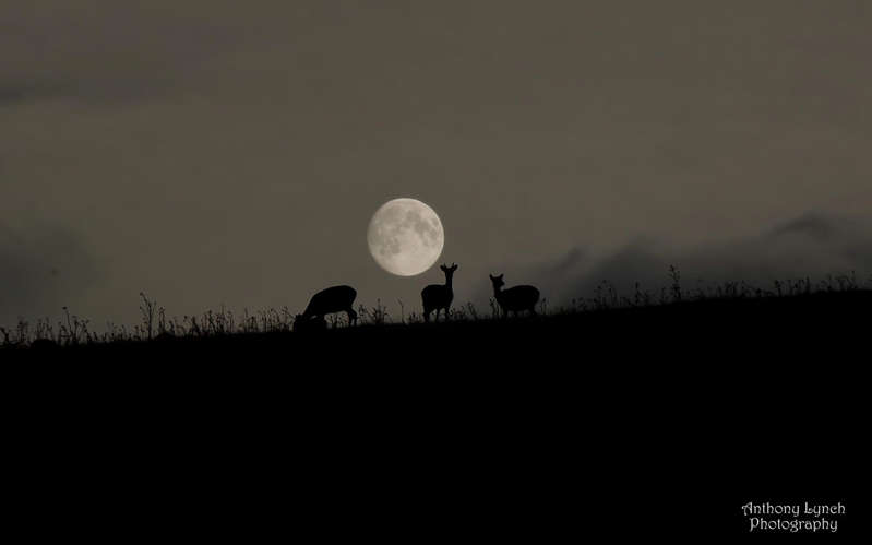 Astrophotographer Anthony Lynch sent in this photo of the Harvest Moon, September 2013, taken at Phoenix Park in Dublin, Ireland.