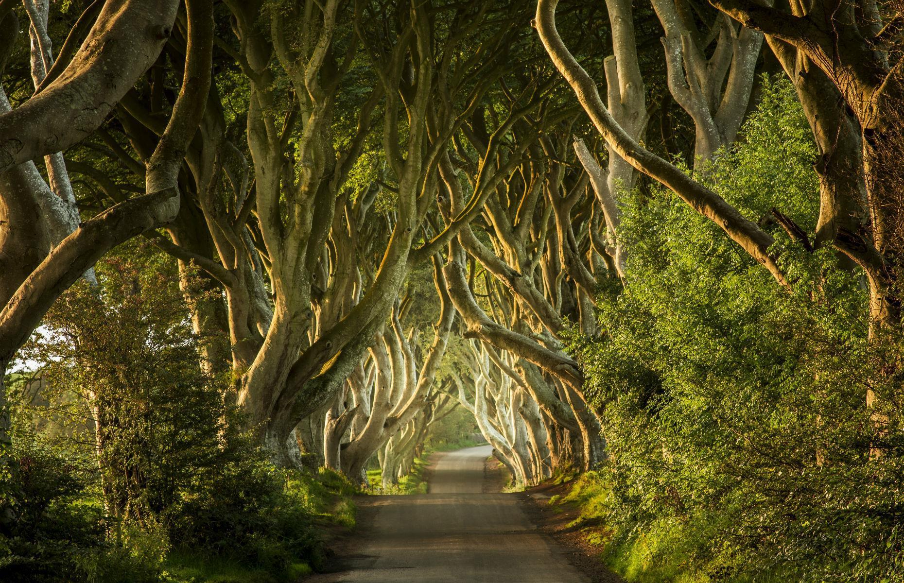 Slide 28 of 41: This haunting avenue of trees is best known for its appearance in fantasy series Game of Thrones. It doubled as the Kingsroad in the cult TV show, though it was originally planted in the 1700s by the Stuart family, who wanted an imposing entryway to their mansion, Gracehill House. Today the bowing beech trees are purported haunted by a specter named the Grey Lady. These are the most mysterious places in the world.