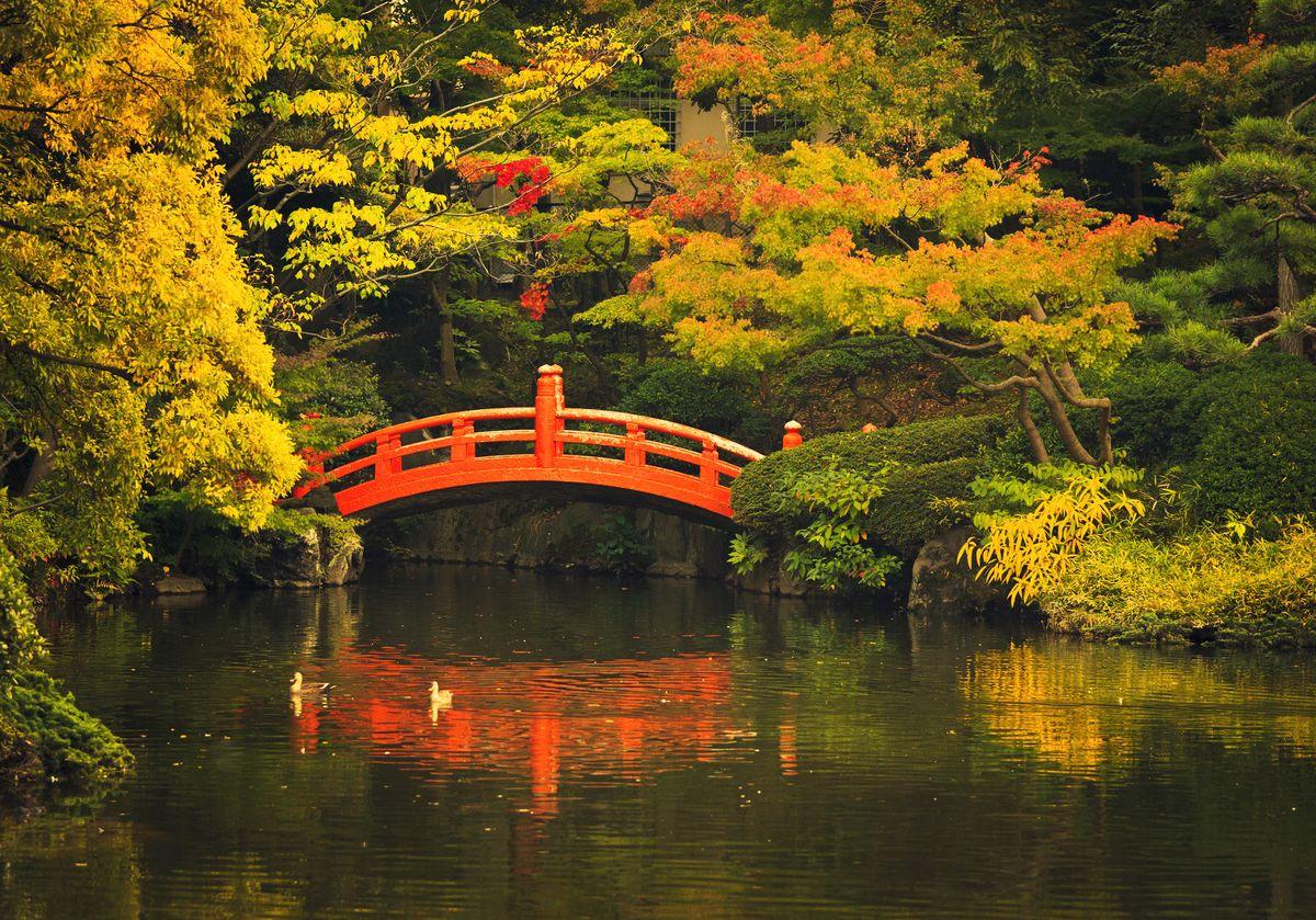 Slide 13 of 33: A quaint bridge and pond in a public park in Tokyo, Japan.