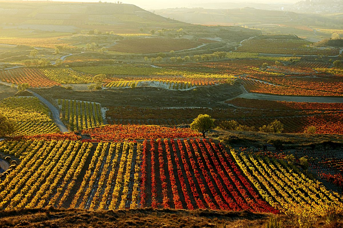 Slide 21 of 33: Vineyards of La Rioja, Spain, a region that produces approximately 300 million liters of wine per year.