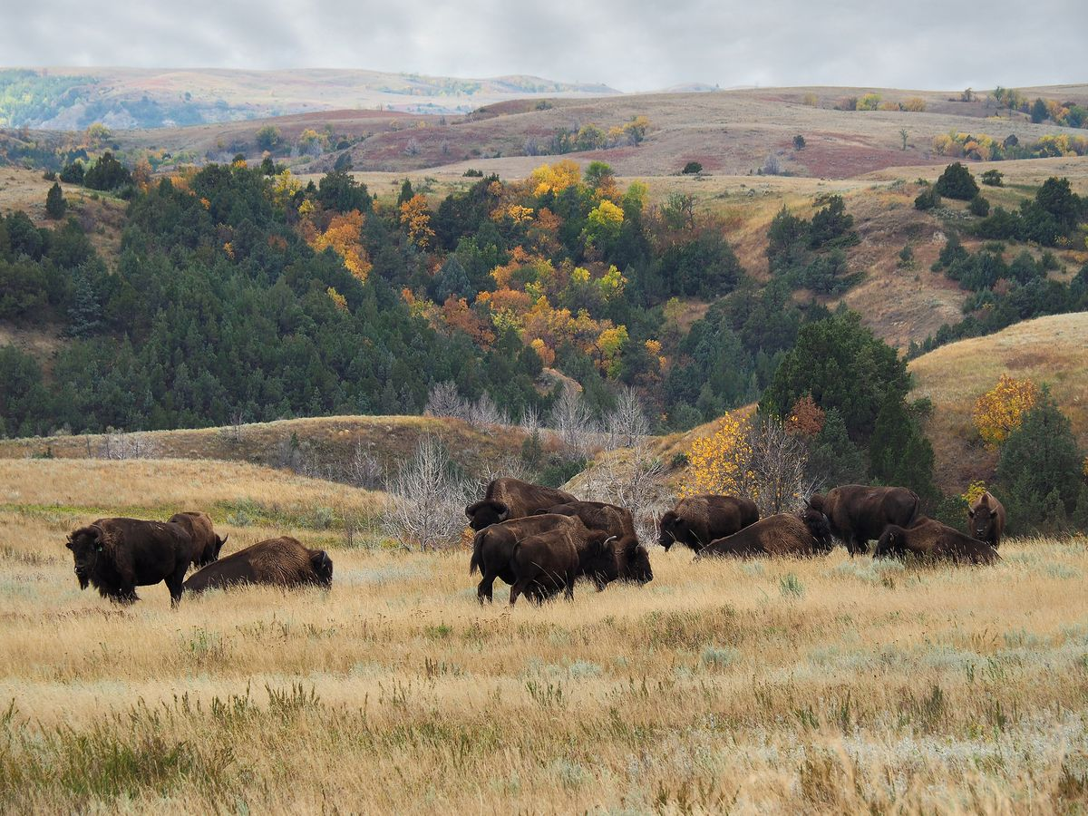 Slide 35 of 51: Theodore Roosevelt National Park President Theodore Roosevelt was a notable supporter of the National Park system and spent a lot of time in the Dakota territories as a young man. This experience changed him, and this park filled with wide open spaces and bison, is named in his honor.
