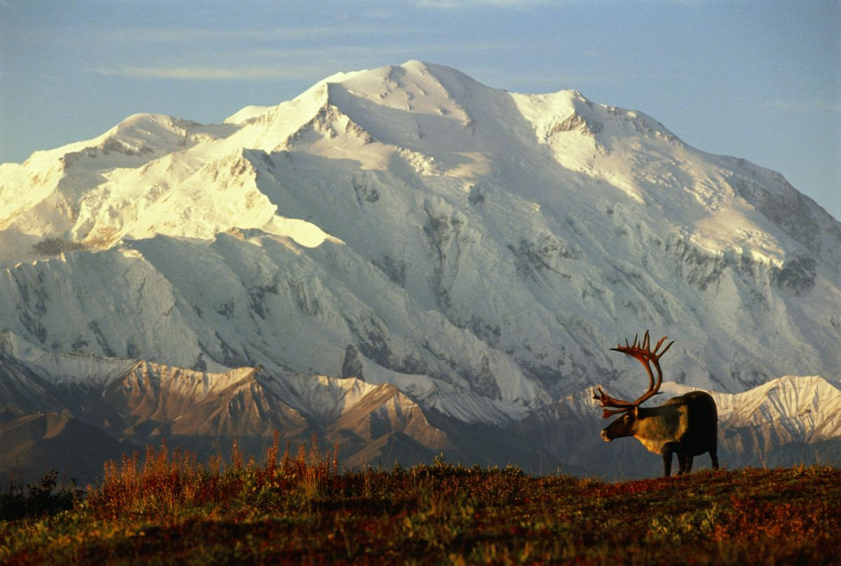Slide 3 of 51: Denali National Park The Land of the Midnight Sun is home to eight National Parks and a total of 17 sites run by the National Park Service. You can't go wrong with any of them, as they are all filled with some of the most pristine natural beauty anywhere in the world. But Denali is home to North America's tallest peak (the mountain previously also known as Mt. McKinley), and has six million acres of wild land to discover.