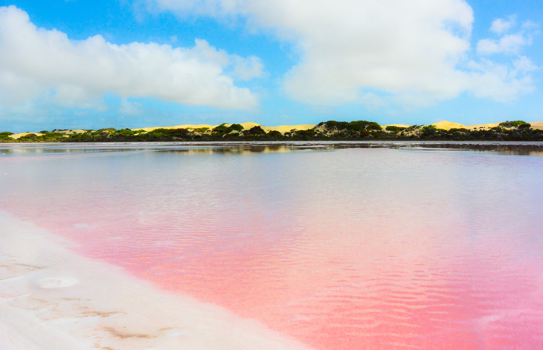 "Slide 15 of 21: With its distinct ""strawberry milkshake"" colour, Lake Hillier is a sight to behold. Its pink tint is caused by a species of microalgae—Dunaliella Salina. Though the water contains significant concentrations of salt, it is clear and perfectly safe to swim in."
