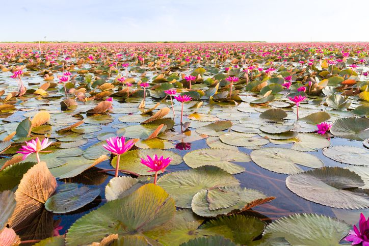 "Slide 42 of 52: This government-protected ""little sea"" is a haven to nearly 200 bird species, and the lotus flowers that bloom from February to March drape the water with pink."