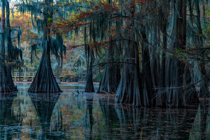 Slide 37 of 52: Bayous and sloughs, punctuated with submerged bald cypress trees and rafts of Spanish moss, make this lake a mysterious place for exploration. The wetland is protected by an international treaty.