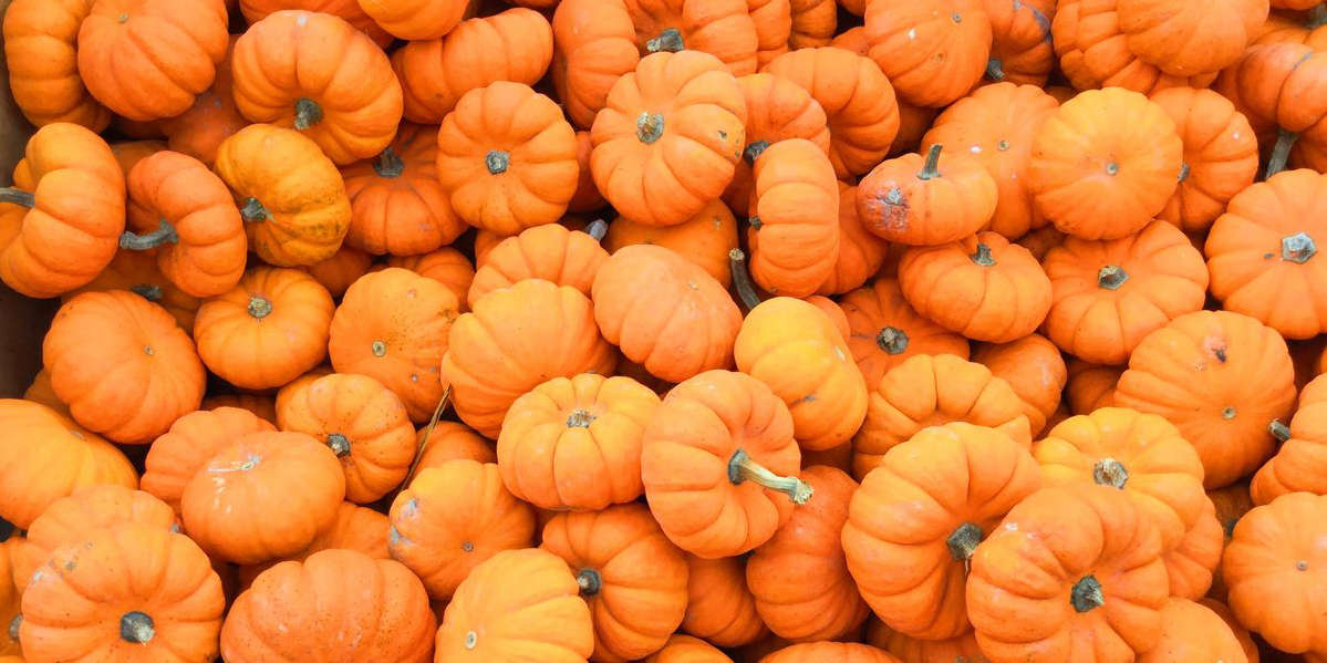 Pumpkin Is a Fall Fave—Here's How to Use It to Fuel Your Runs