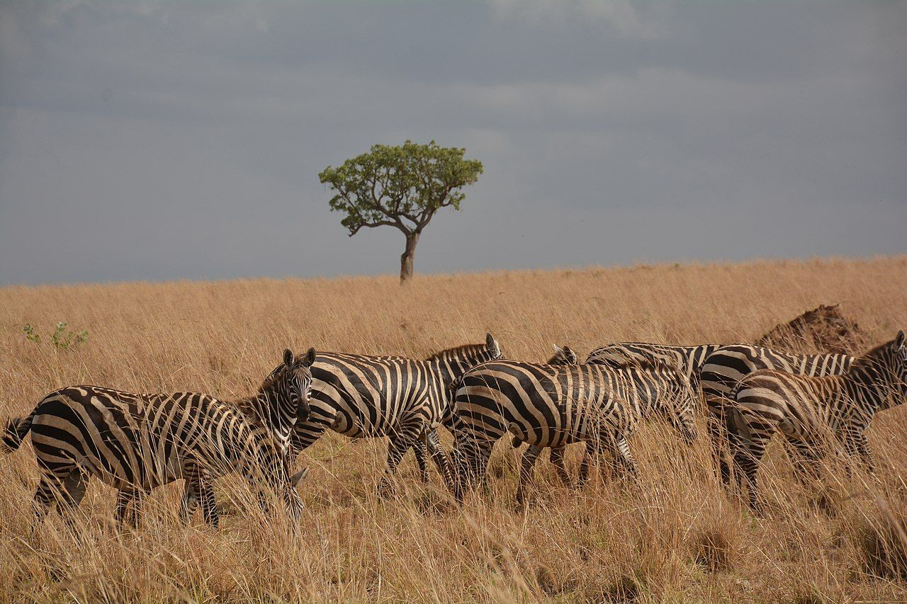 Slide 8 of 31: The semi-arid plains and valleys of this Ugandan park are a sanctuary for many species of animals, and a perfect playground for safari lovers. The dry season spanning July and August is the best time to visit, when animals gather around water holes. On expeditions or hikes through the park, visitors can see lions, gazelles, elephants, giraffes and dozens of other species.