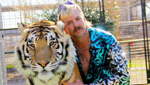 a person holding an animal: The Netflix series was huge success with views and contains a whirlwind of murder plots, drug use, love and breakups, bitter feuds and a controversial set of tiger zoos and sanctuaries. The 'Tiger King', Joe Exotic, was thrilled with his newfound fame, even from behind prison bars, but animal rights organisations thought the show's producers ignored the issue of tiger abuse, such as the cub-petting industry.