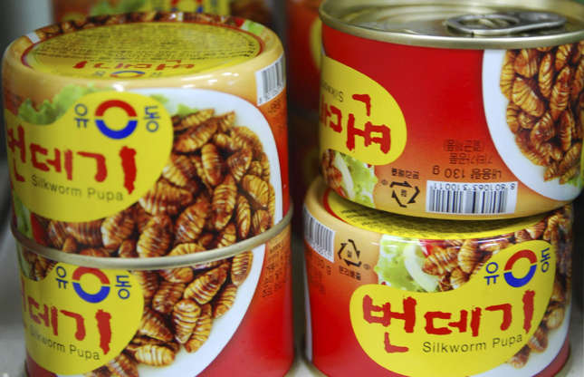 Slide 7 of 29: In Korean, Chinese and Vietnamese cuisines, eating silkworm pupae is perfectly normal. The snack is considered good for the environment because the insect has finished making silk so would otherwise go to waste. Steamed or fried, they're said to be crunchy on the outside and juicy within.