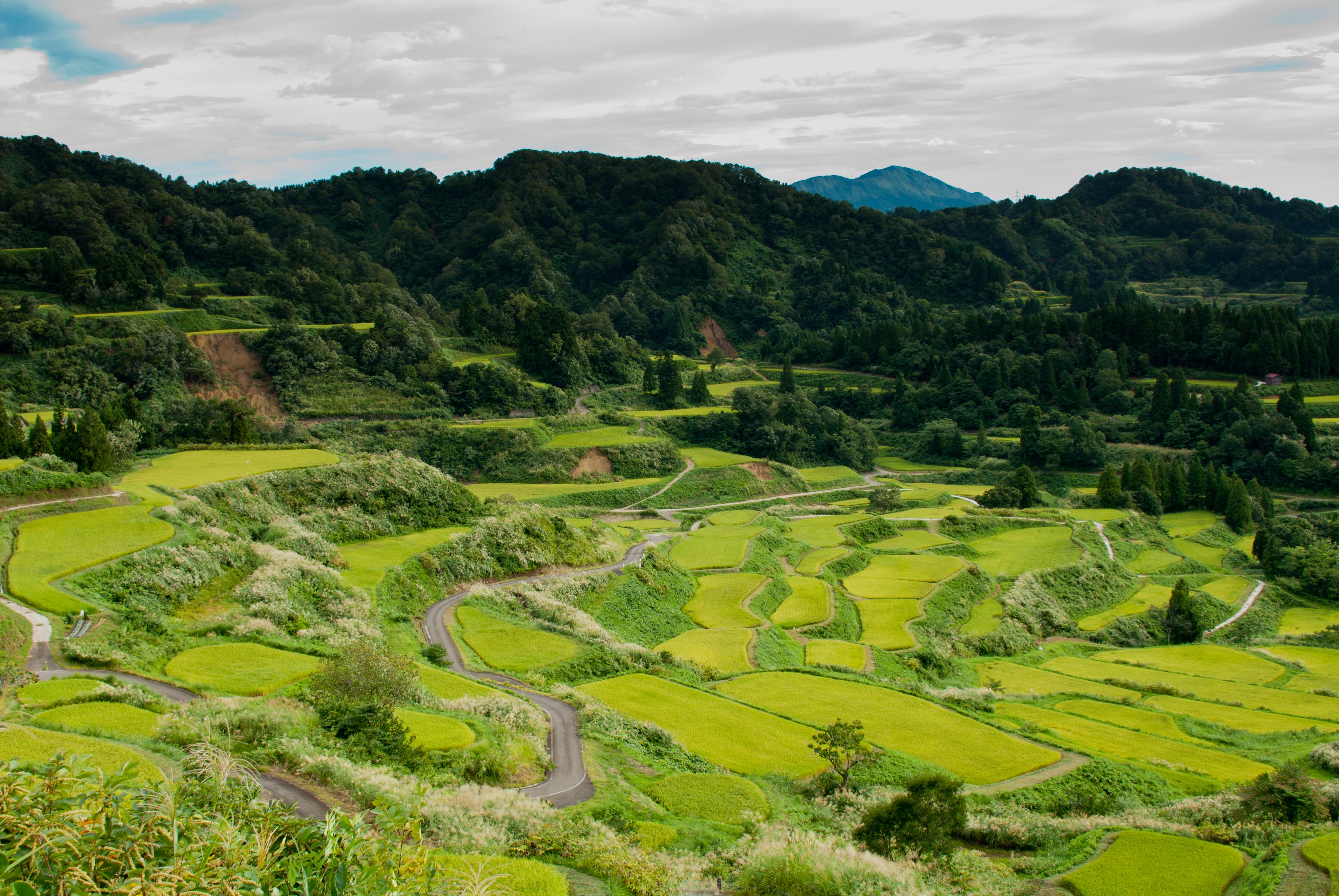 Slide 10 of 41: Rice Terrace morning