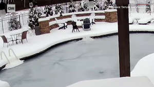 Owner plunges into frozen pool to save dog
