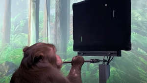 a cat sitting in front of a window: Pager, a nine year old Macaque, plays MindPong with his Neuralink.   www.neuralink.com