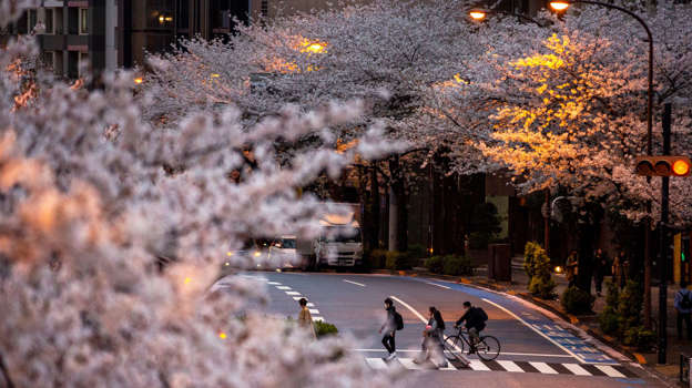 People wearing protective masks to help curb the spread of the coronavirus walk across a street under a canopy of cherry blossoms Sunday, March 28, 2021, in Tokyo. (AP Photo/Kiichiro Sato)