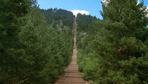 a tree in a forest: Apolo Ohno shares Manitou Incline reminders