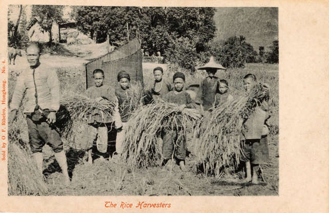 Slide 24 of 31: This postcard shows a party of young rice harvesters in rural China in the early 1900s. According to Encyclopedia Britannica, the earliest evidence of rice cultivation has been found in China, dating from 7000 to 5000 BCE. Although changes in agricultural production methods in the 1970s created a large surplus of agricultural labour and led many villagers to seek out factory jobs in the cities, such that more than half of the country's population of 1.3 billion now lives in cities, many rural Chinese landscapes are even now dominated by rice fields, the encyclopedia states.