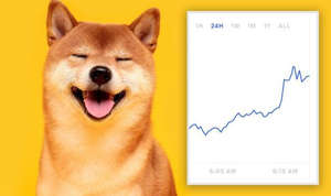 a dog looking at the camera: Dogecoin price: DOGE price chart and Shina Inu dog