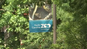 a sign on a pole next to a tree: Here's when the NC Zoo will break ground on Asia expansion