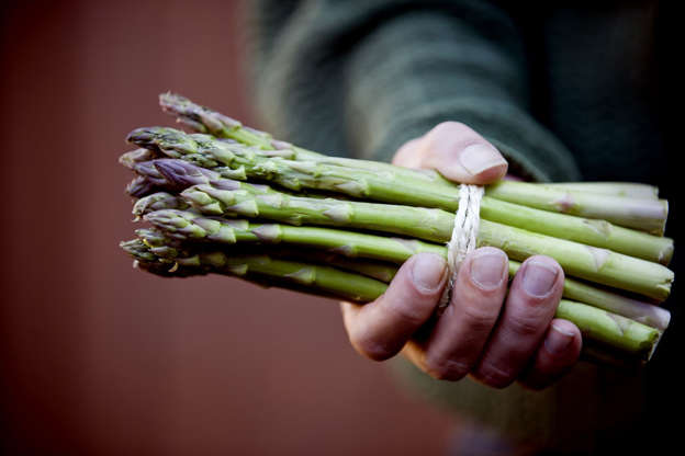 what foods increase testosterone levels in men