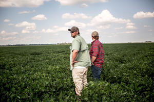 Brian Smith and his cousin Hughes, both fifth generation soybean farmers, stand in soybean fields their family tend to that show signs of having been affected by Dicamba use.