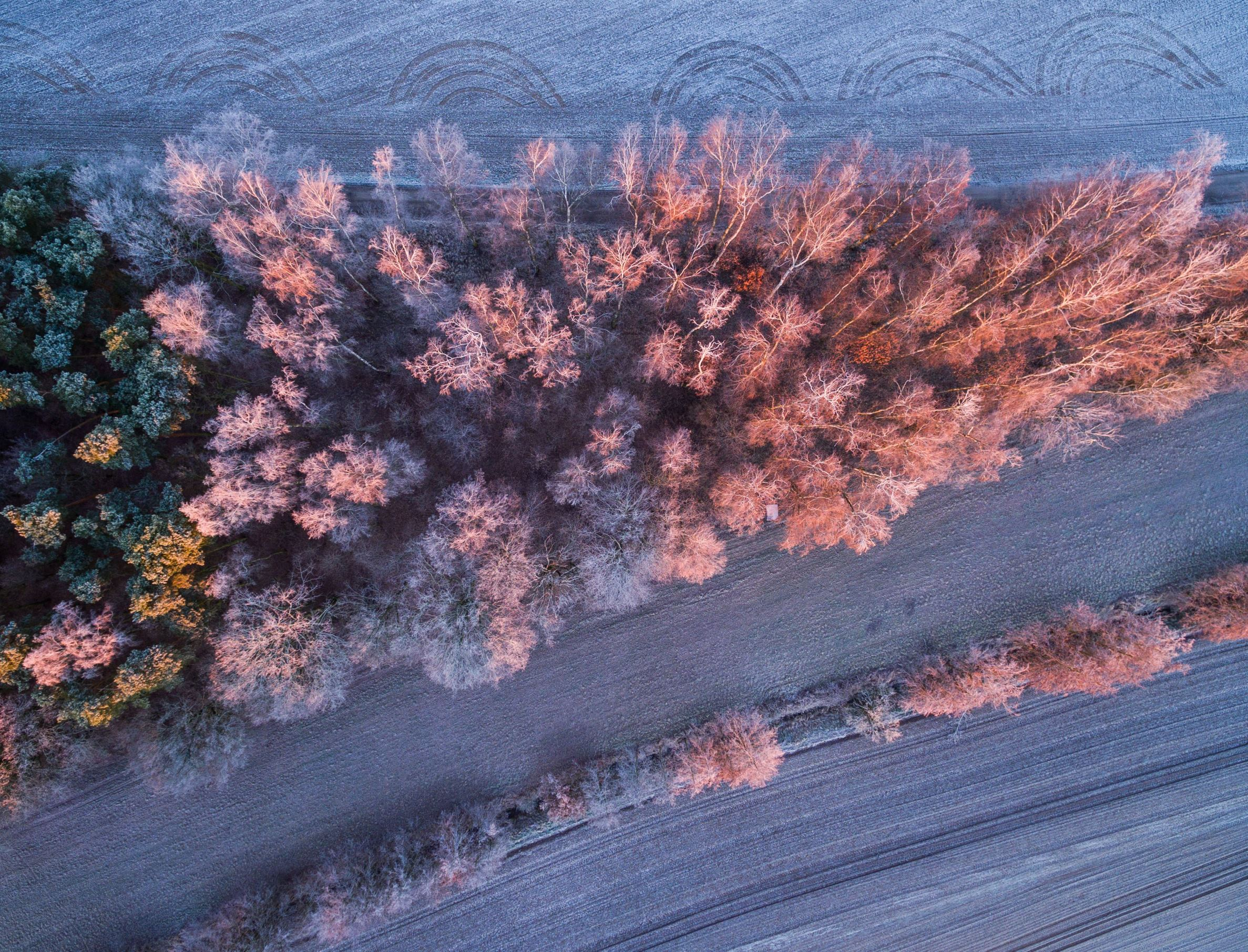 Slide 22 of 100: An aerial view taken by a drone shows the warm light of the rising sun shining on the frost-covered landscape near Jacobsdorf, Germany, 31 December 2016.