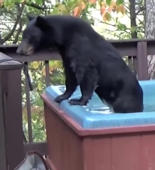 Bear takes relaxing dip