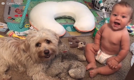 The most adorable friendship between a dog and a baby